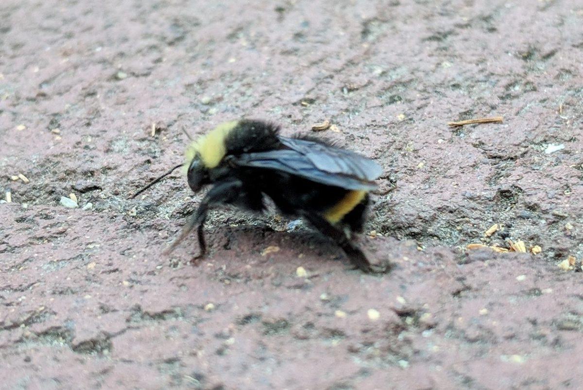 I ain't afraid of no bees: days 511 — 520