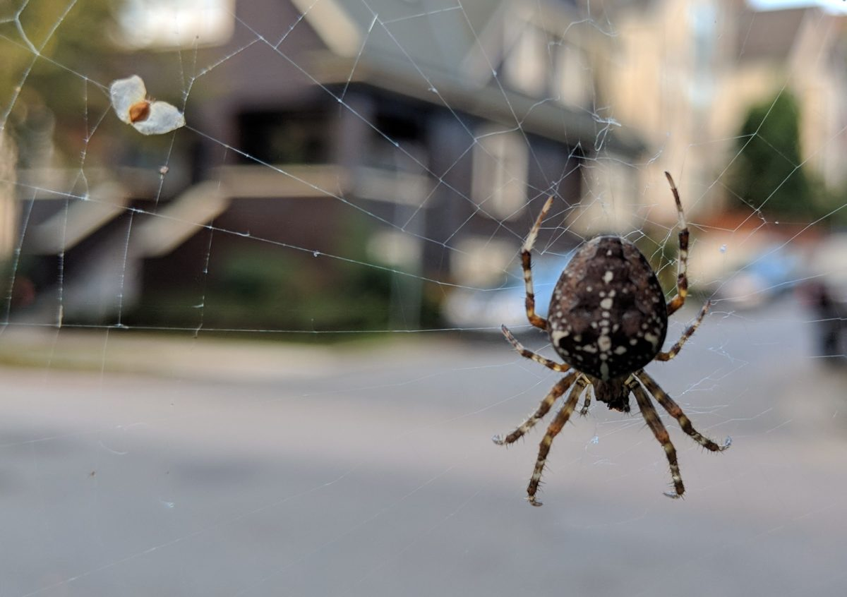 The vegetarian spider: days 631 — 640