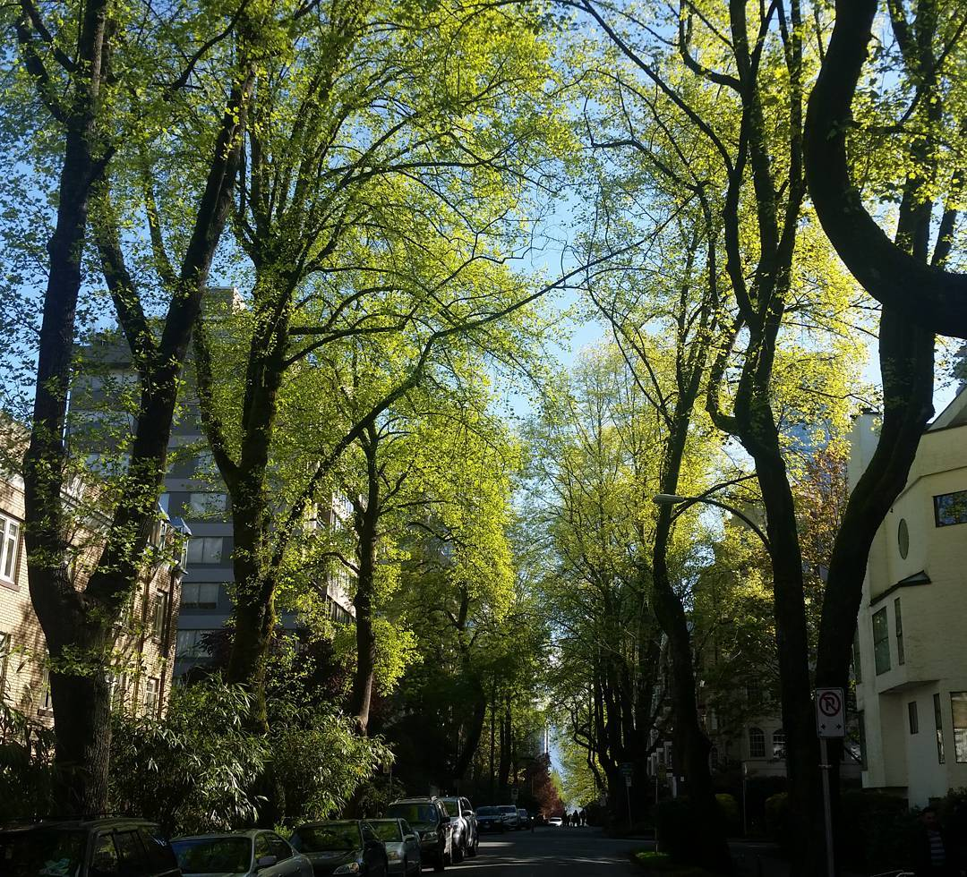 A West End side street under a green canopy and a bit of blue sky