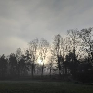 Sun behind fog and trees