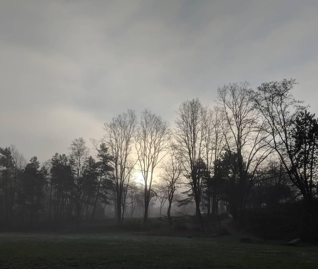 Sun behind fog and trees