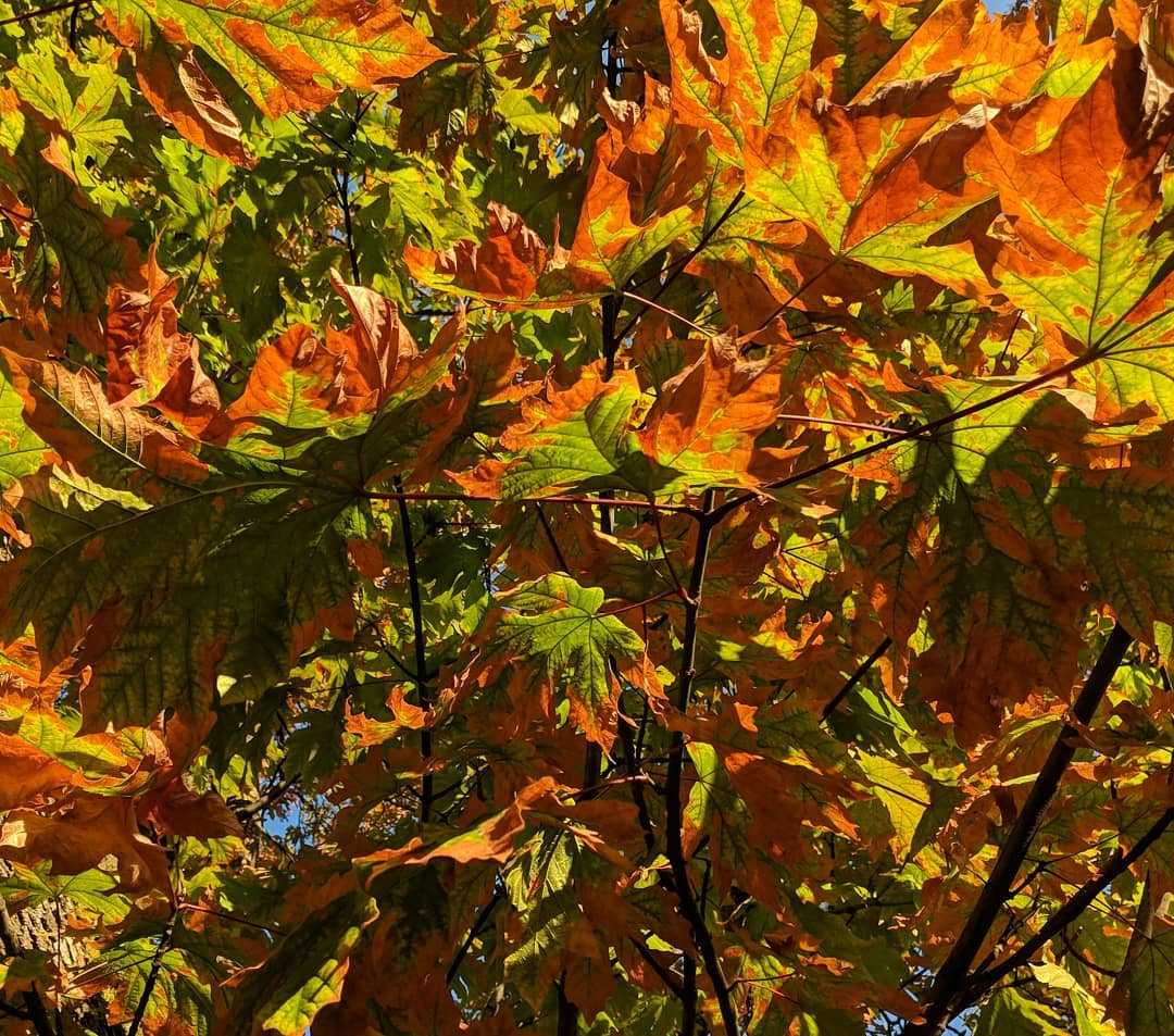 Orange and green leaves
