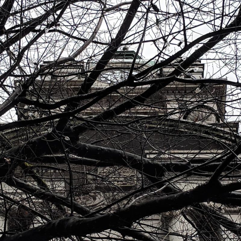 Bare branches and grey building