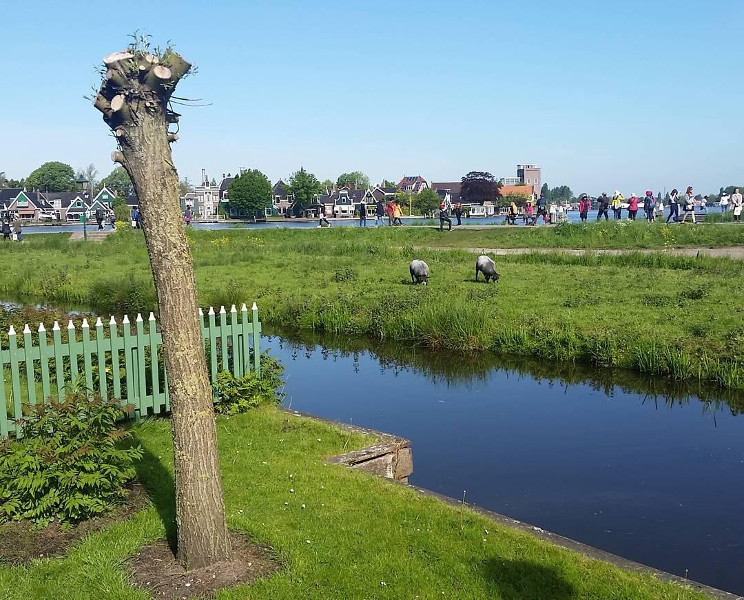 Dutch heritage village