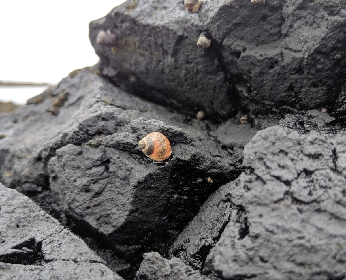 small orange shell