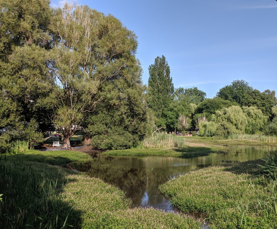 Trees and pond