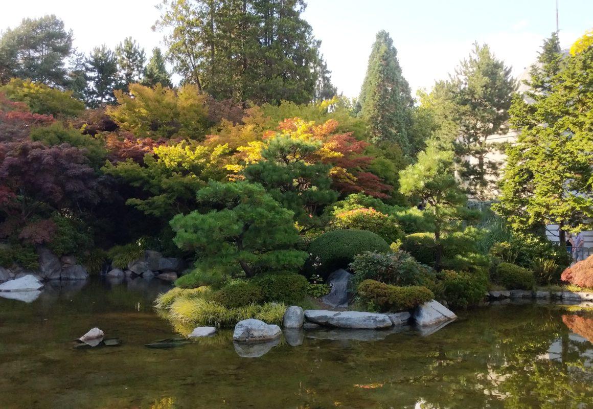 Bushes over pond