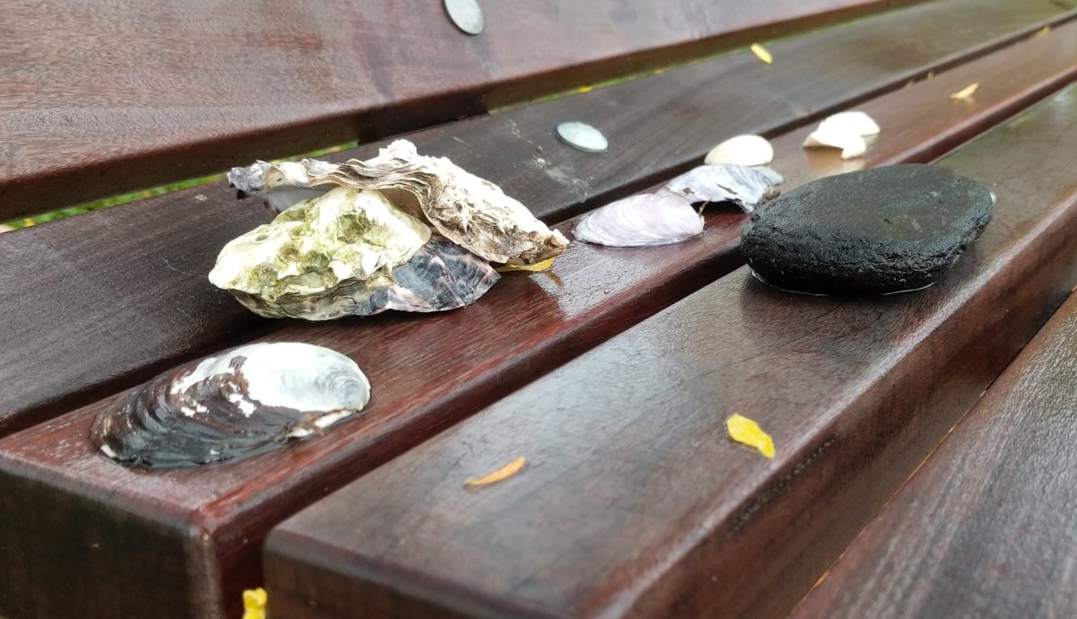 Shells and stone on a bench