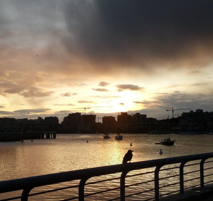 Sunrise and crow