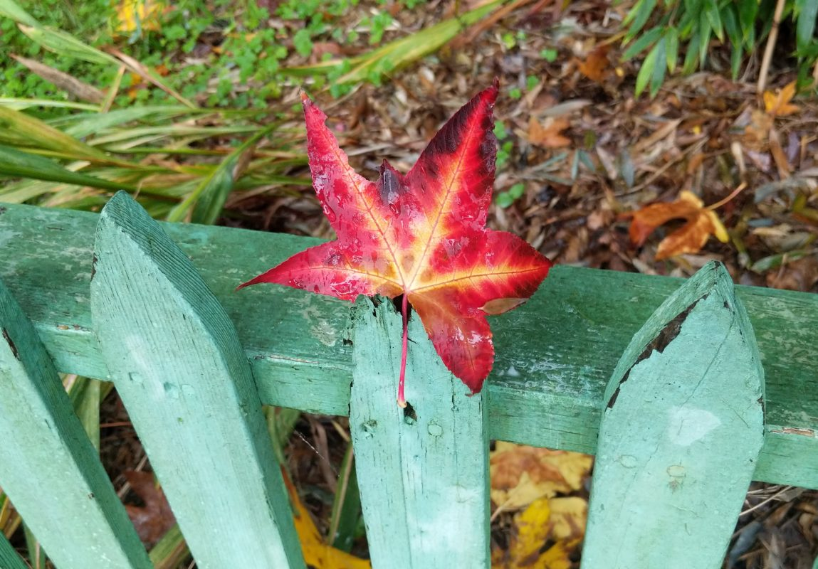Red leaf on green fence
