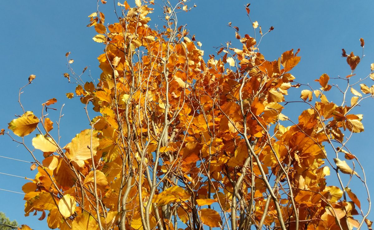 Top of orange tree