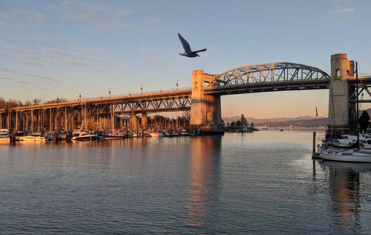 Burrard Bridge and seagull