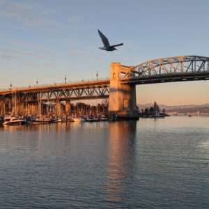 Burrard Bridge and seagull