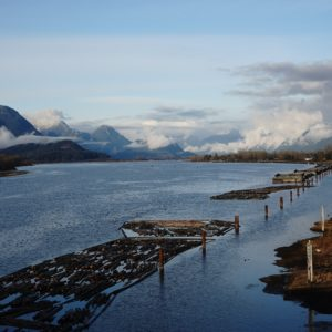 Pitt River and logs