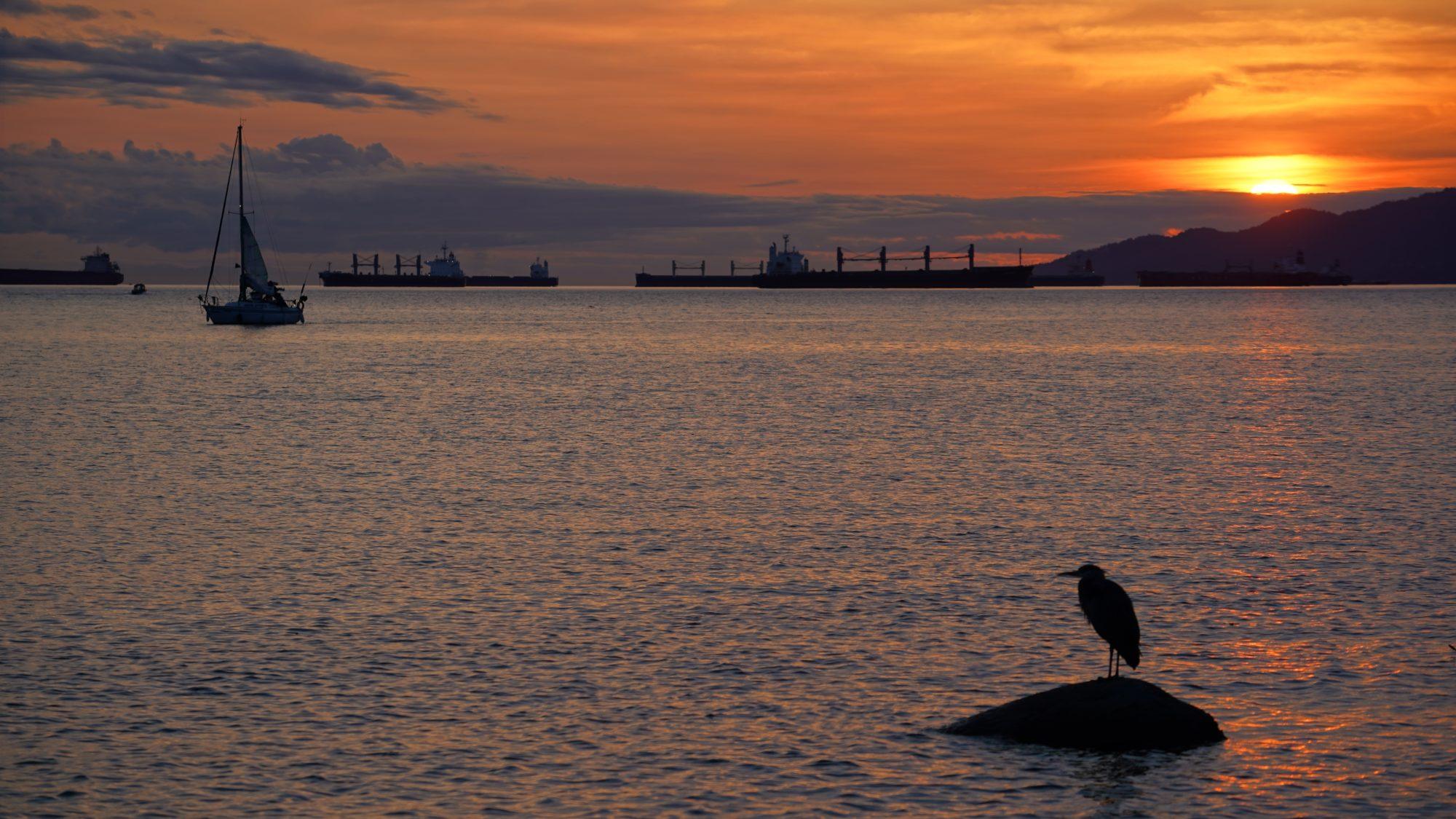 Heron watching the sunset