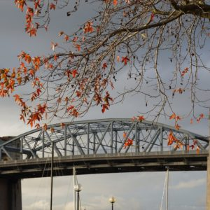 Burrard Bridge, leaves