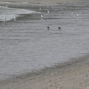 English Bay Beach at low tide