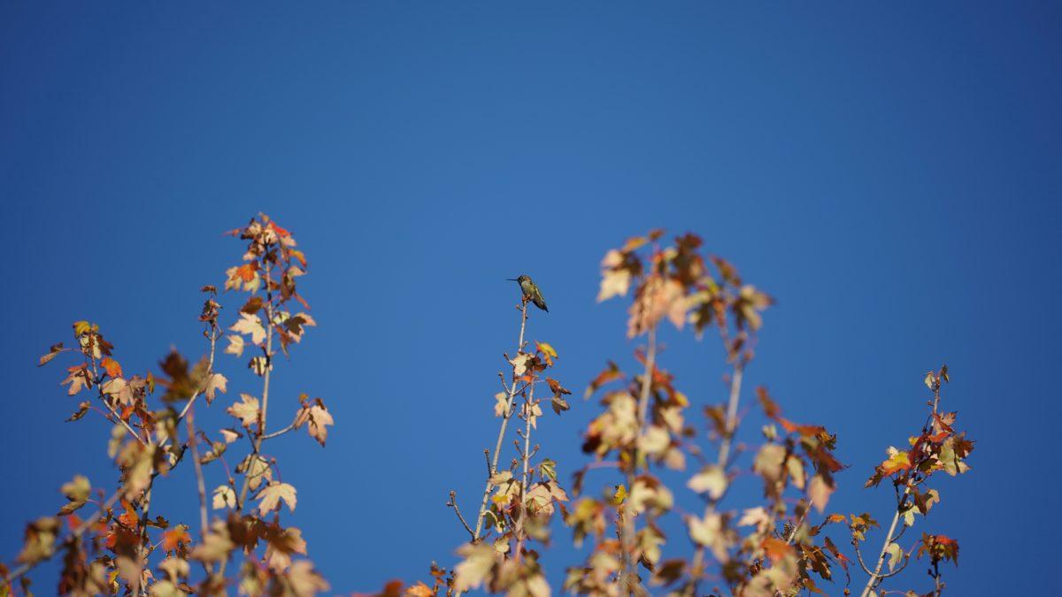 faraway hummingbird