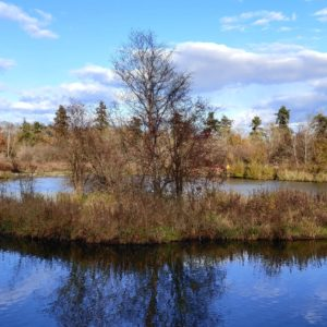 Many ponds