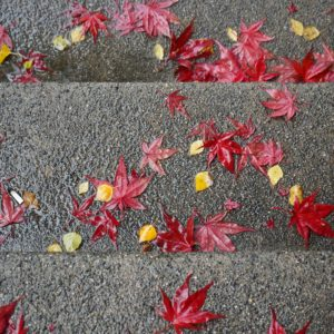 Red leaves on grey stairs