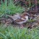 House sparrow, common but cute