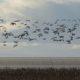 A flock of seagulls