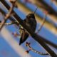 Hummingbird from below