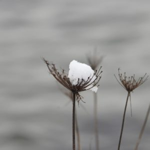 Clump of snow