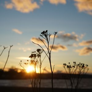 Sunset and twigs