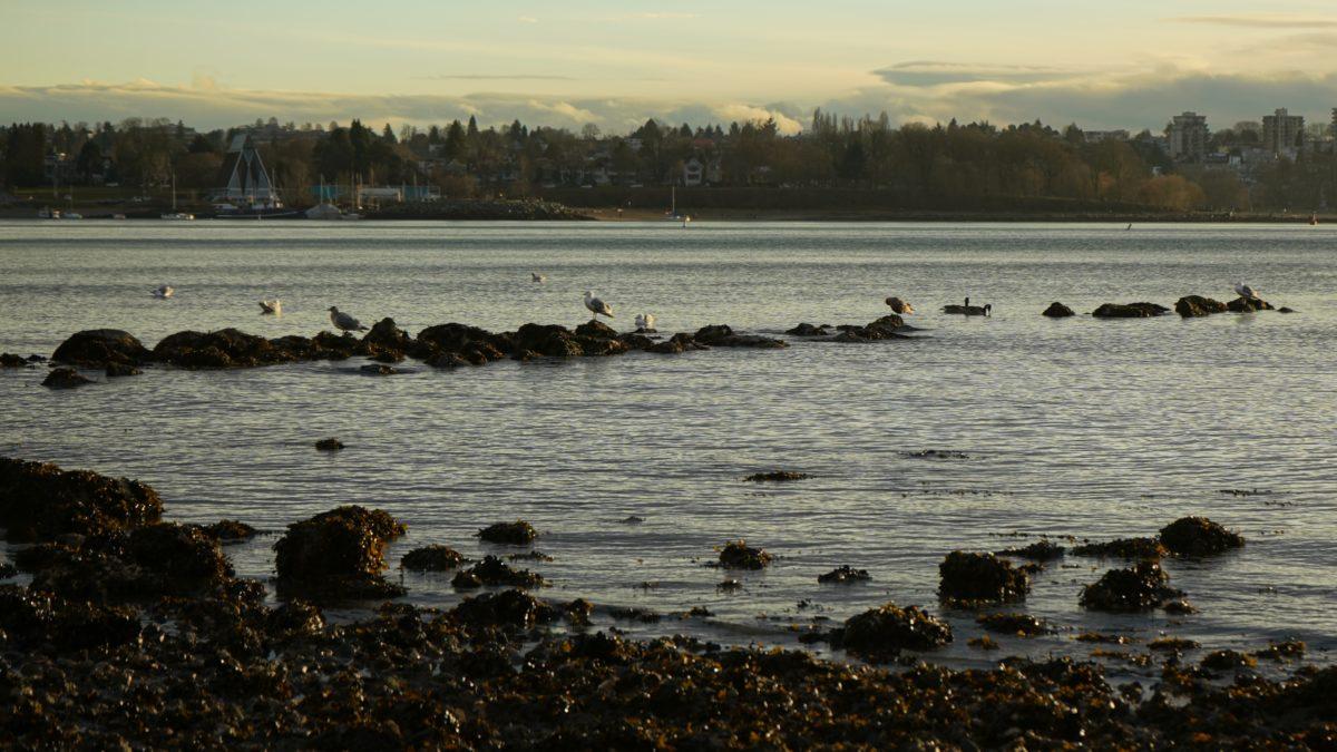 seagulls on rocks