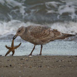 seagull and starfish