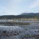 End of Burrard Inlet, low tide