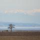 Little faraway tree