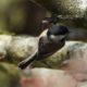 Busy little chickadee