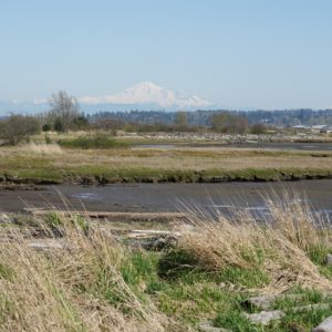 Mud Bay and Mount Baker