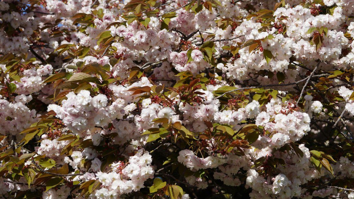 Fluffy white flowers