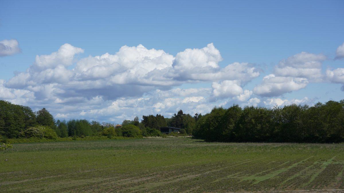 Meadows near Reifel