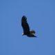 More soaring