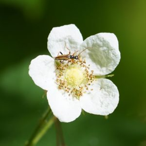 Small bug on flower