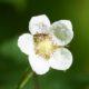 Lil bug on lil flower
